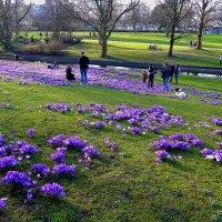 Отдых среди крокусов в парке цветов весной :: Nina Yudicheva