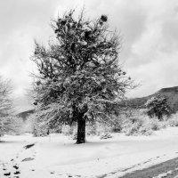 весна в марте :: Олеся Енина