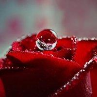 Розовые истории :: Olena