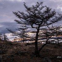 весна на Байкале :: наталья