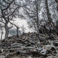 природа Байкала :: наталья