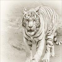 Тигрица :: Nn semonov_nn