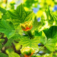 flowering :: Vitalij P