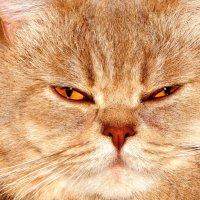 Портрет любимого кота :: Natalia Babukh