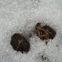 тает снег :: helga 2015