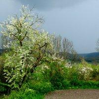 Весна :: helenly