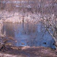 Весенний пруд :: Людмила Монахова