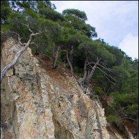 И на камнях растут деревья :: Михаил Розенберг