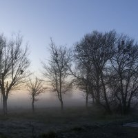 Утро :: Sergey Kuznetcov