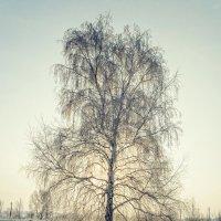 Иней :: Yuri Silin
