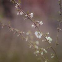 Весна в моих глазах.... :: Мисак Каладжян