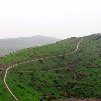 Golan :: A.M. Photo
