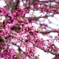 spring :: A.M. Photo