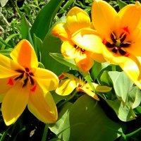цветы  весны. :: Ivana