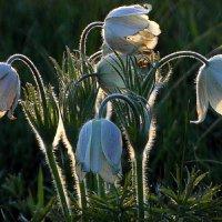 Весенние цветы. :: nadyasilyuk Вознюк