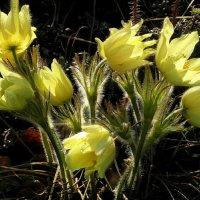 Солнечные цветы. :: nadyasilyuk Вознюк