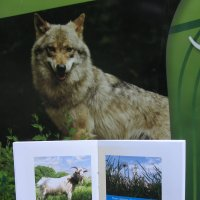 Идёт коза рогатая за малыми волчатами :: Алекс Аро Аро