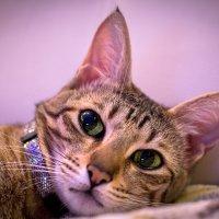 Cat :: Александр Тихий