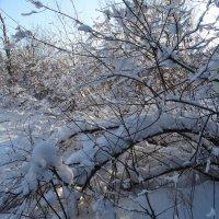 Снежно :: Владимир Звягин