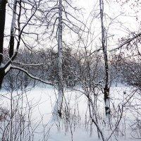 Снежное покрывало :: Маргарита Батырева