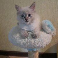 Меня от мамы вчера забрали, и Каспером назвали... :: Людмила Огнева