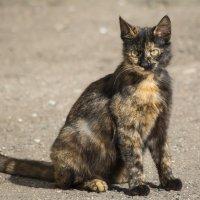 И снова кошки... :: Татьяна Огаркова