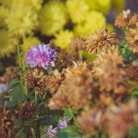 Цветы :: Александр Колесников