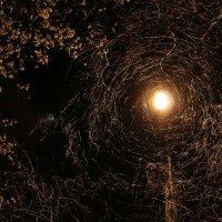 Ночь. Улица. Фонарь. :: Ирина Ивановна