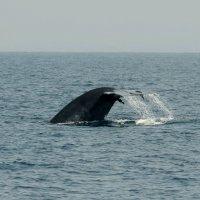 Хвост голубого кита :: Юрий Белоусов