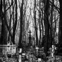 смоленское кладбище в утреннем тумане :: Владислав Попов