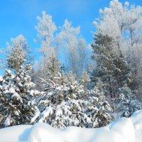 Снежной зимой :: Владимир Звягин