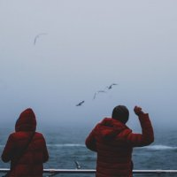 People&seagulls :: Alexandr Mozharenko