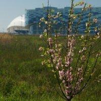 весеннее цветение :: Олег Кручинин