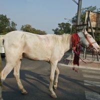 Белый конь :: Татьяна Василюк