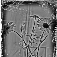 Как в старые черно-белые времена.... :: Tatiana Markova