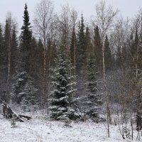 Зимняя картинка в мае :: Татьяна Соловьева