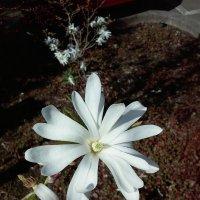 Flower. :: Ольга Швец