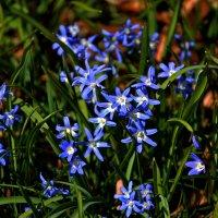 Голубое дыхание ... :: Владимир Икомацких