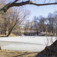 Лефортовский парк :: Юля Колосова