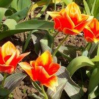 Первый день второго месяца весны :: Александр Скамо