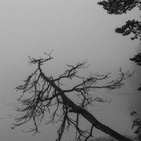 дерево над водой в утреннем тумане :: Владислав Попов