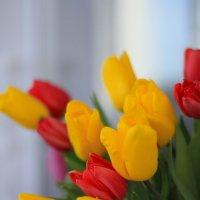 Тюльпаны :: Анна Дорофеева