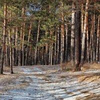 Осень в Чемском бору :: Дмитрий Конев