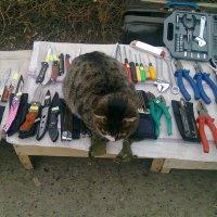 Внимание акция!!! При покупке трех пассатижей  кот в подарок! :: Олег Дейнега