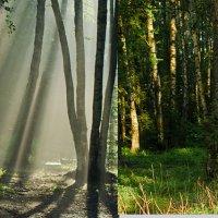 Сравнение туман -  прозрачная атмосфера :: Nina Grishina