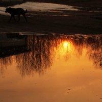 На закате дня :: Николай Сапегин