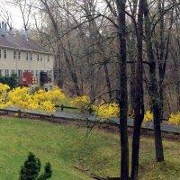 В город Wein пришла весна :: Елена