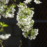 Каждый цветок отдельное чудо! :: azer Zade