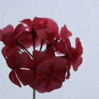 Цветок :: Ксения Роянова