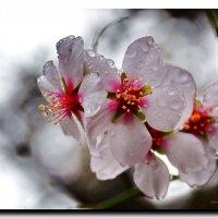 Весенний дождь :: Ольга Голубева